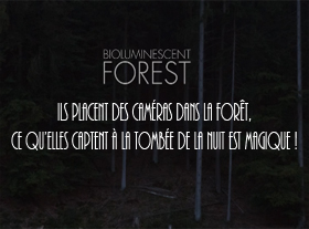 Projections in the Forest