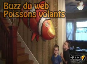 Buzz du web - Poissons volants