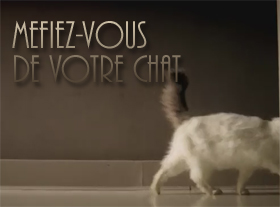 Méfiez-vous de votre chat, hi hi hi !