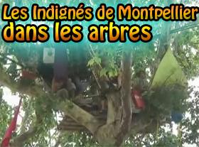 Les Indignés de Montpellier dans les arbres