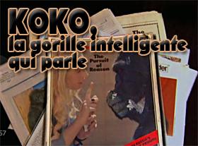 KOKO, la gorille intelligente qui parle