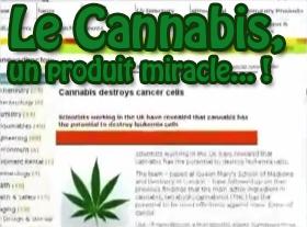 Le Cannabis, un produit miracle... !